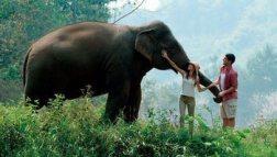 Elefanti_cambogia