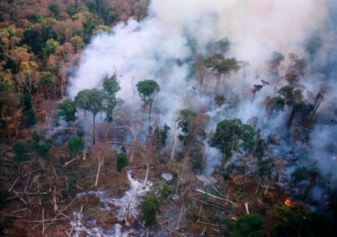 deforestazione_cambogia