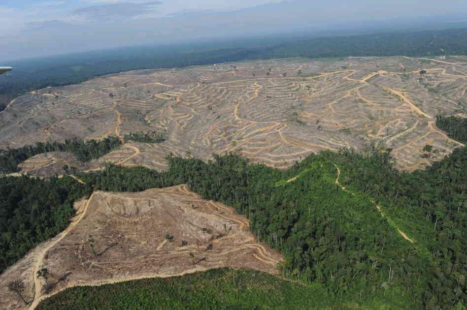 deforestazione_cambogia-jpg2