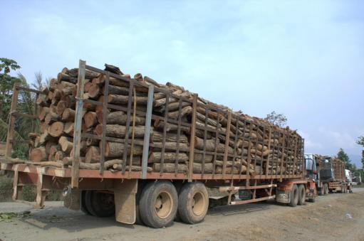deforestazione_cambogia-jpg3